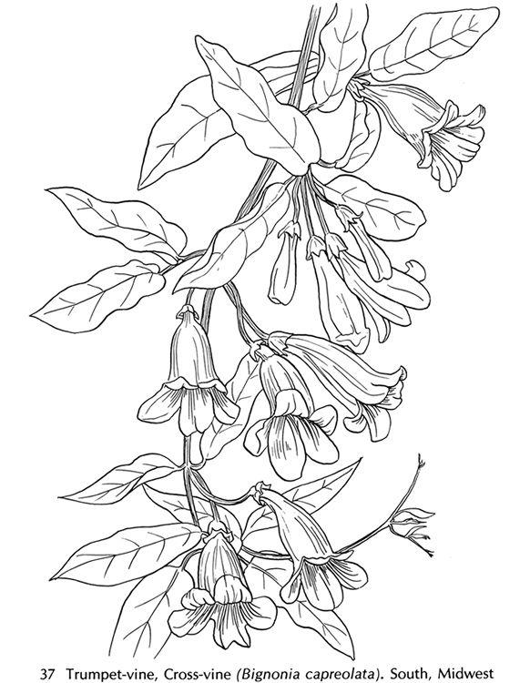 american wild flowers-3