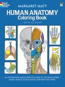 human anatomy -1